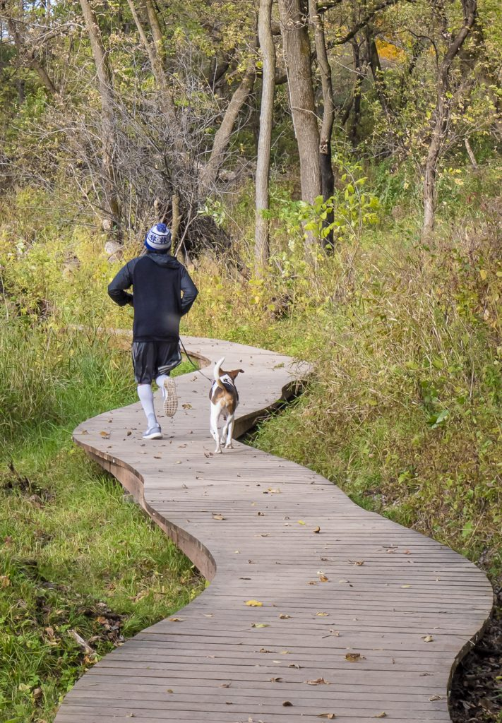 Male jogging with dog away from view through woodland along a curving boardwalk